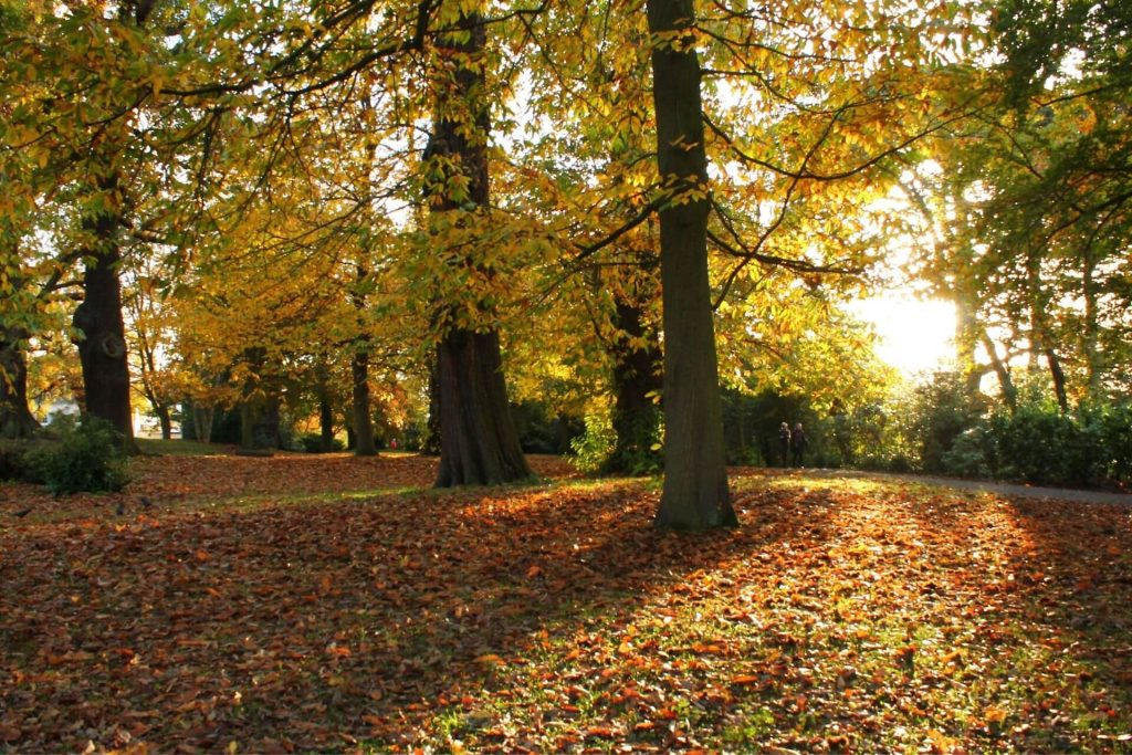 nature helps to improves mental health and wellbeing